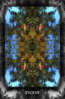 Arboretum Imaginarium_Evolve