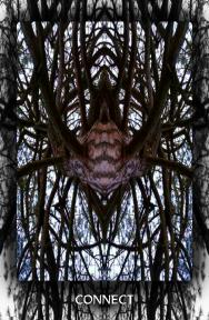 Arboretum Imaginarium_Connect
