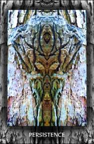 Arboretum Imaginarium_Conf_Print_B_000022