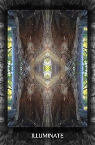 Arboretum Imaginarium_Illuminate
